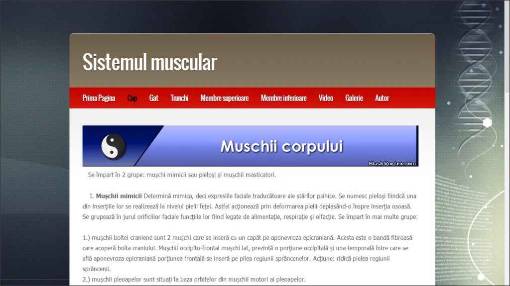 sistemul muscular al omului