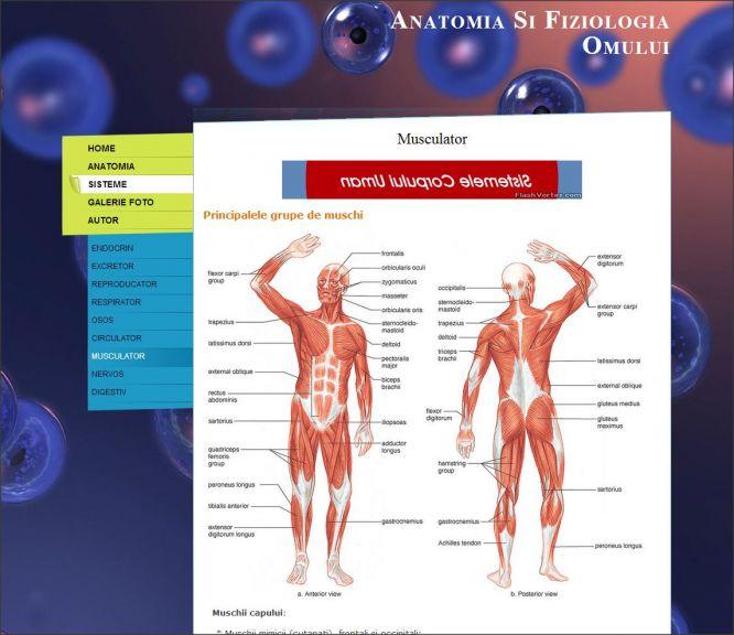 Atestat Informatica Anatomia Si Fiziologia Omului. Atestat ...