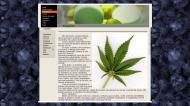 atestat informatica drogurile 3