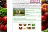 atestat informatica html alimentatie sanatoasa 8