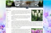 atestat informatica html flori 3