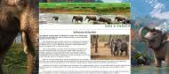 atestat informatica india elefantii html 3