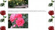 atestat informatica trandafirul 6