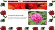 atestat informatica trandafirul 7