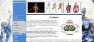 atestat_informatica_html_anatomia_omului_4