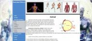 atestat_informatica_html_anatomia_omului_5